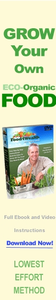Food4Wealth Ebook and Video Set