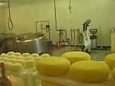 Goat cheese factory