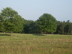 Pasture with fence and trees