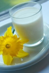 Glass of goat milk with yellow flower