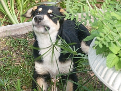 Dog pulling weeds with teeth